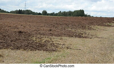 plowed field bird stork - plowed agricultural field and...