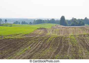 Plowed field during the spring
