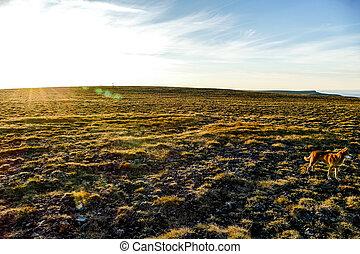 plowed field in spring, in Norway Scandinavia North Europe , taken in nordkapp, europe