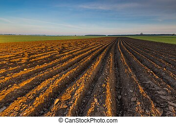 Plowed field landscape in calm polish countryside. ...