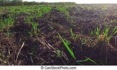 plowed field motion steadicam with little green shots....
