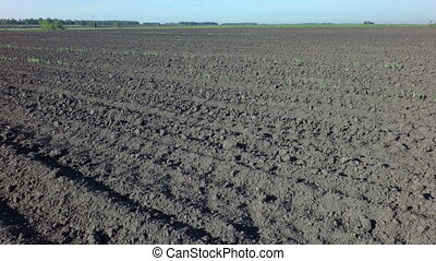 Plowed field ready for sowing. Omsk region. Russia