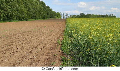 plowed field, spring Rape field