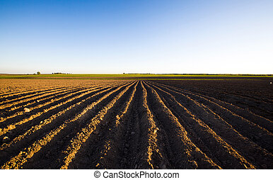 plowed field - the plowed agricultural field on which grow...