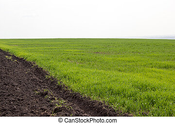 Plowed field with green grass on a summer day