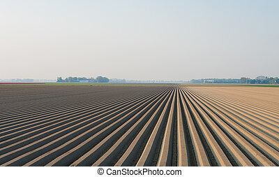 plowed field with straight furrows in the netherlands