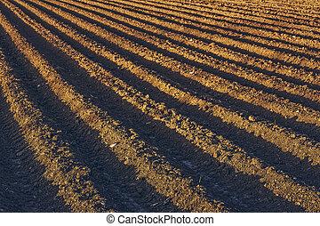 Plowed potatoe field