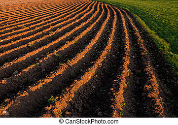 Plowed rows in a farming field - Plowed planting rows in a ...