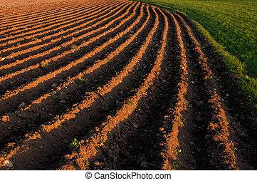 Plowed planting rows in a farming field