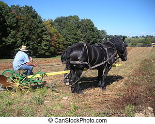 Plowing - Horse pulling a old timey plow