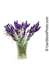 plucked lavender in glass vase isolated on white background