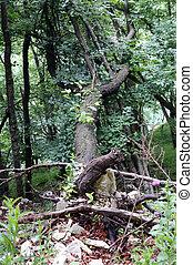 pluie torrentielle, après, forêt arbre, baissé
