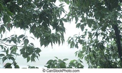 pluie versant, feuilles