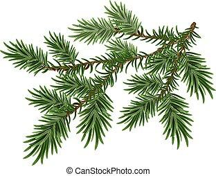 pluizig, groene, dennenboom, tak