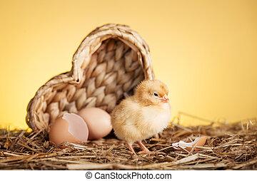 pluizig, kleine, chicken, in, nest
