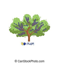 Plum garden fruit tree with name vector Illustration