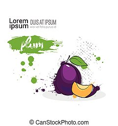 Plum Hand Drawn Watercolor Fruit On White Background With Copy Space