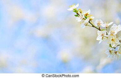 Plum tree flowers against bokeh background