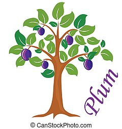 Plum tree vector illustration. Plum fruit.
