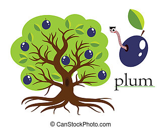 Plum tree ,vector - Plum tree, vector
