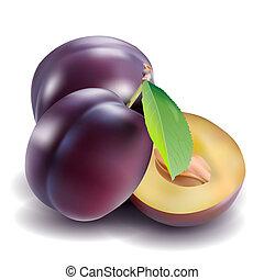Vector plum