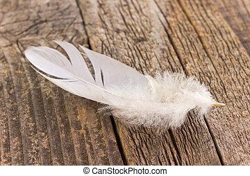 pluma blanca, en, viejo, de madera, plano de fondo