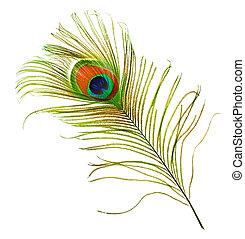 pluma de pavo real, encima, blanco