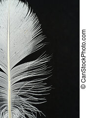 pluma, detalles, en, b