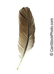 pluma pájaro