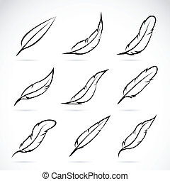 pluma, vector, grupo