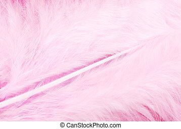 plumage, cor-de-rosa, pena, textura
