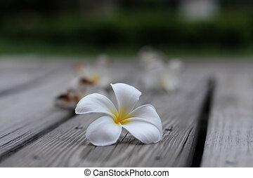Plumaria flowers on the wood