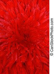 plumas, fondo rojo