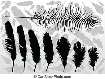 plumas, ilustración, vector, colección, plano de fondo, ...