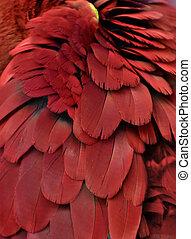 plumas, rojo