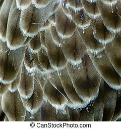 plume aigle, détail