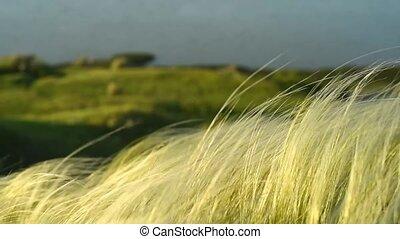 plume, argent, mouvementde va-et-vient, vent, herbe, levers...