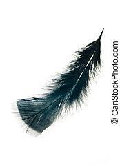plume, blanc, noir, isolé, fond