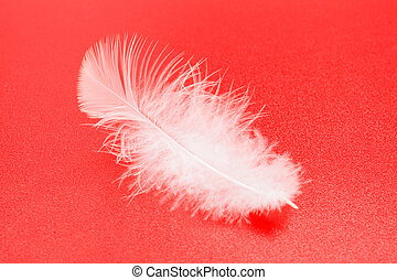 plume blanche, rouges