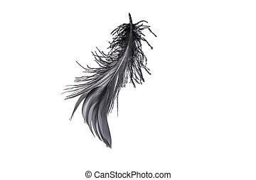 plume, cygne, noir
