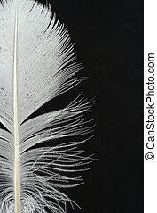 plume, détails, sur, b