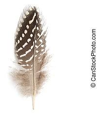 plume, fond blanc
