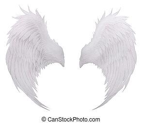 plume, fond, isolé, oiseaux, f, aile, usage, plumage, blanc