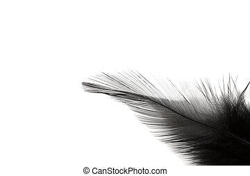 plume, noir, blanc, isolé