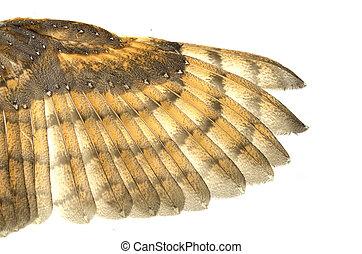 plume, texture, oiseau, fond, aile