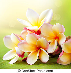 plumeria, トロピカル, flower., エステ, frangipani