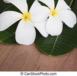 plumeria, aromatherapy, flor