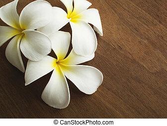 Plumeria aromatherapy flower