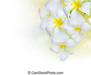 plumeria, bloemen, border., spa, frangipani