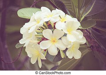 plumeria, blomma, gammal, retro, årgång, stil